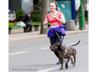 Bėgimo varžybos, kuriose dalyviai laukiami su savo keturkojais
