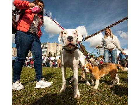 Gyvūnų mylėtojai tradiciškai susitiks Gargžduose 2017