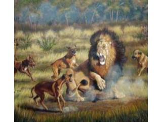 Rodezijos Ridžbekas – veislės istorija